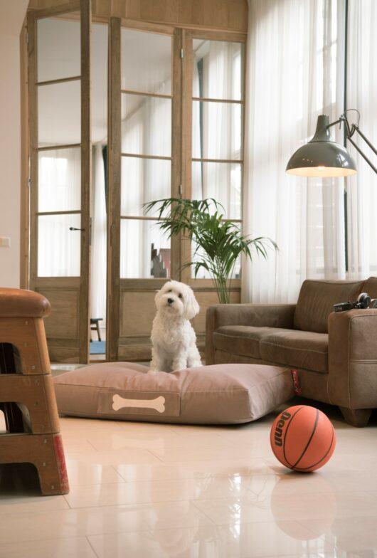 Fotoliu Puf Fatboy® doggielounge small 1
